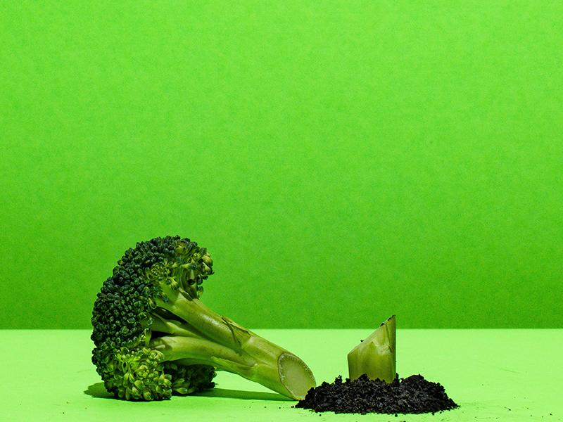 Stalk of broccoli cut down, illustrating responsibility for staff well-being